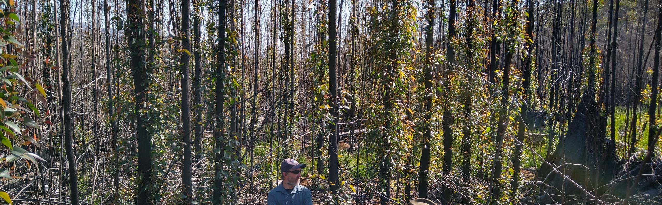 Fire Centre Ecologist discusses fire risk and clearfelling